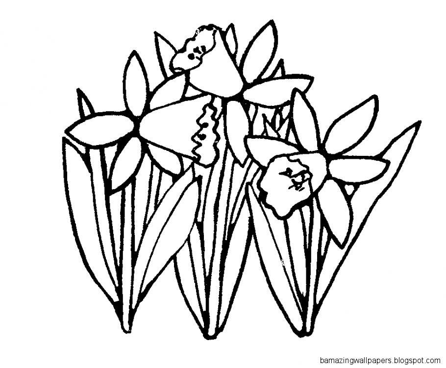 Daffodil Clip Art Black And White.