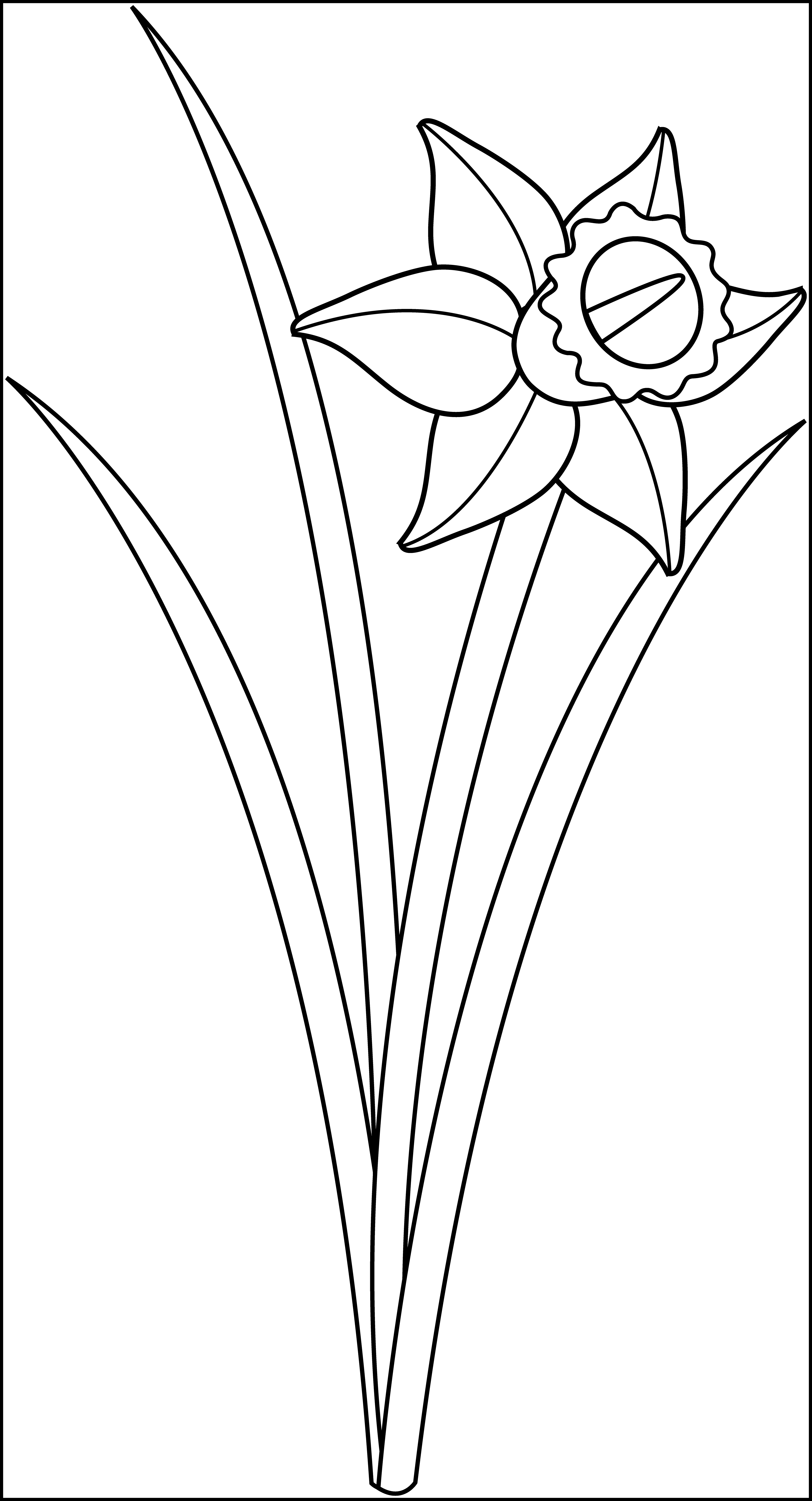 Daffodil clipart black and white 2 » Clipart Station.