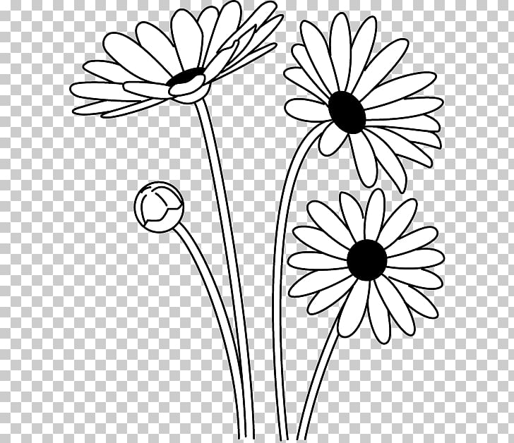 Oxeye daisy Black and white Argyranthemum frutescens.
