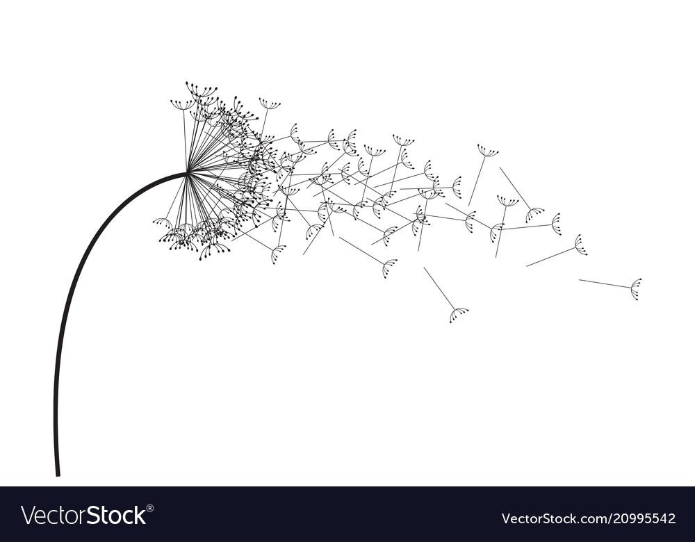 Black and white dandelion.