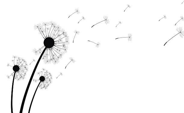 Best Dandelion Seed Illustrations, Royalty.