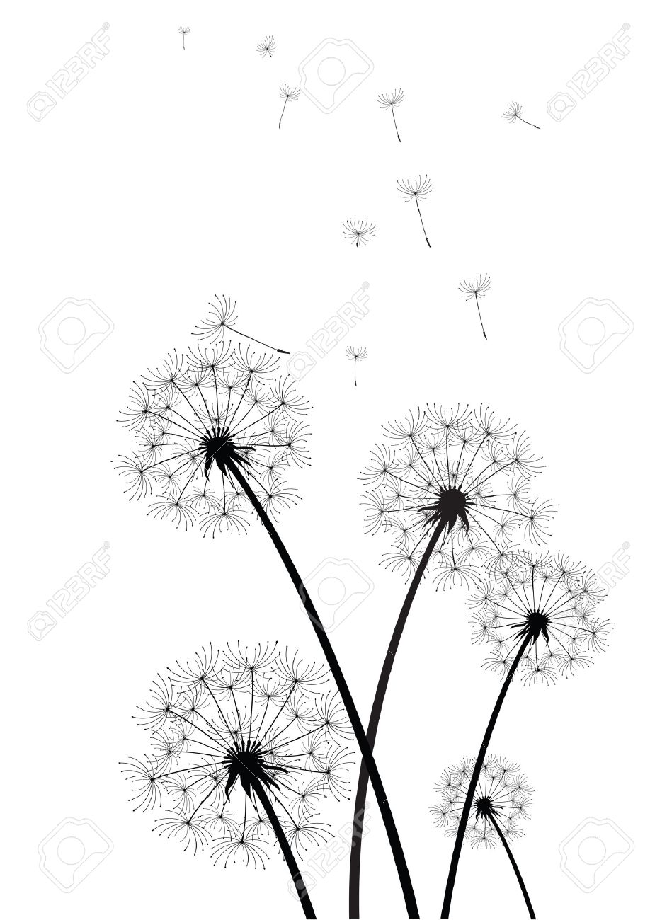 black and white dandelions vector.