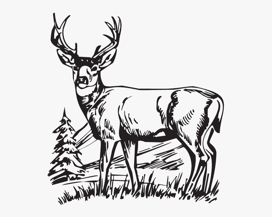 Hunting Clipart Deer.