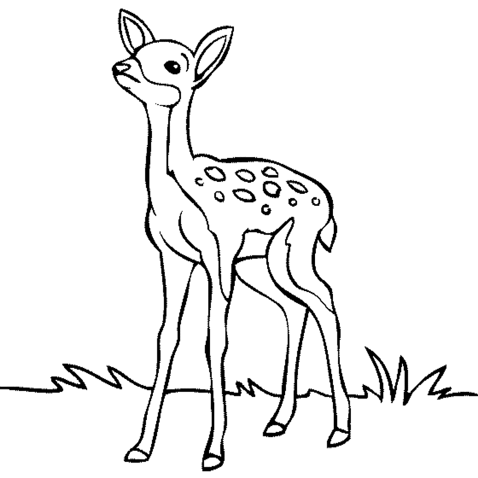 Baby Deer Clipart Black And White clipartsgram.