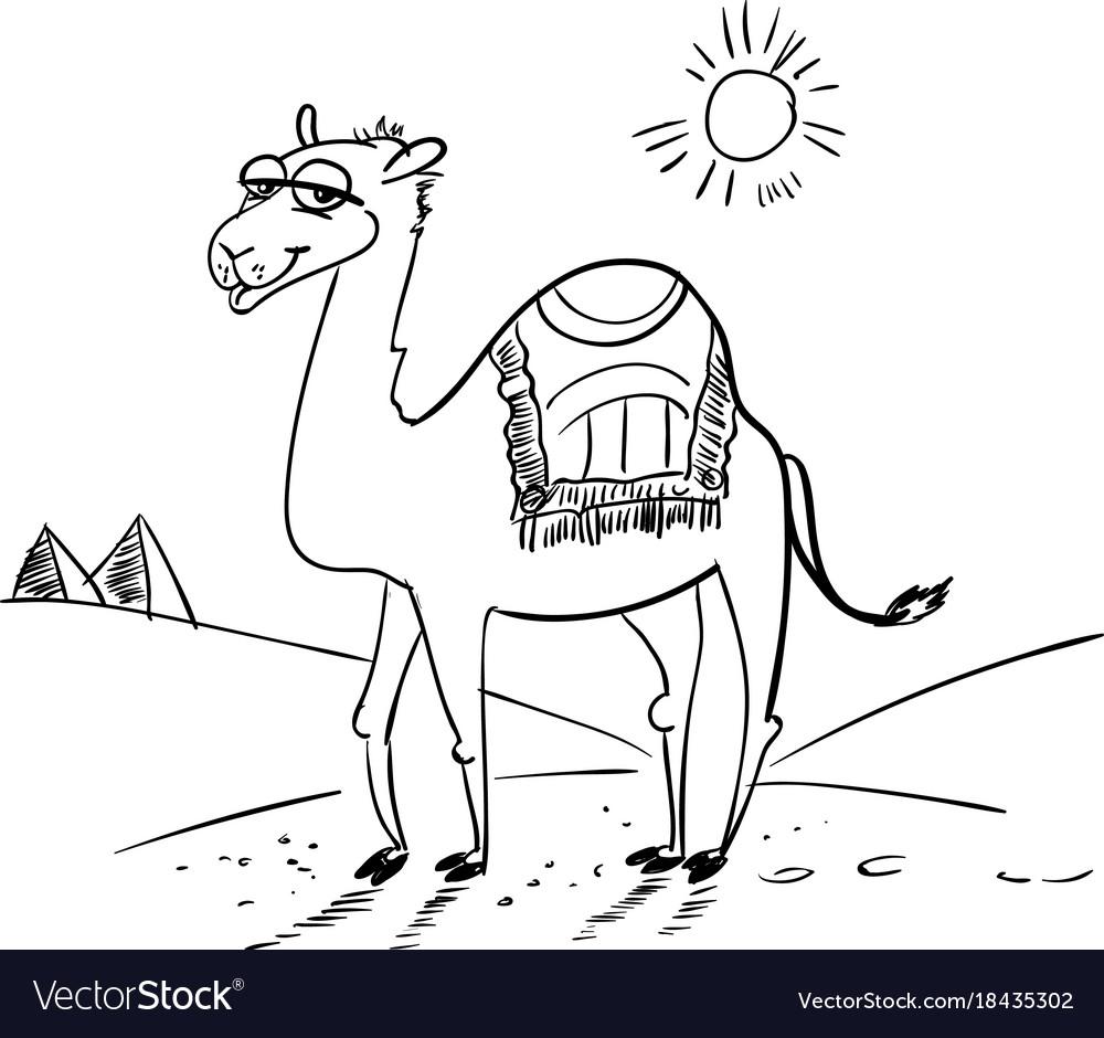 Camel in the desert.