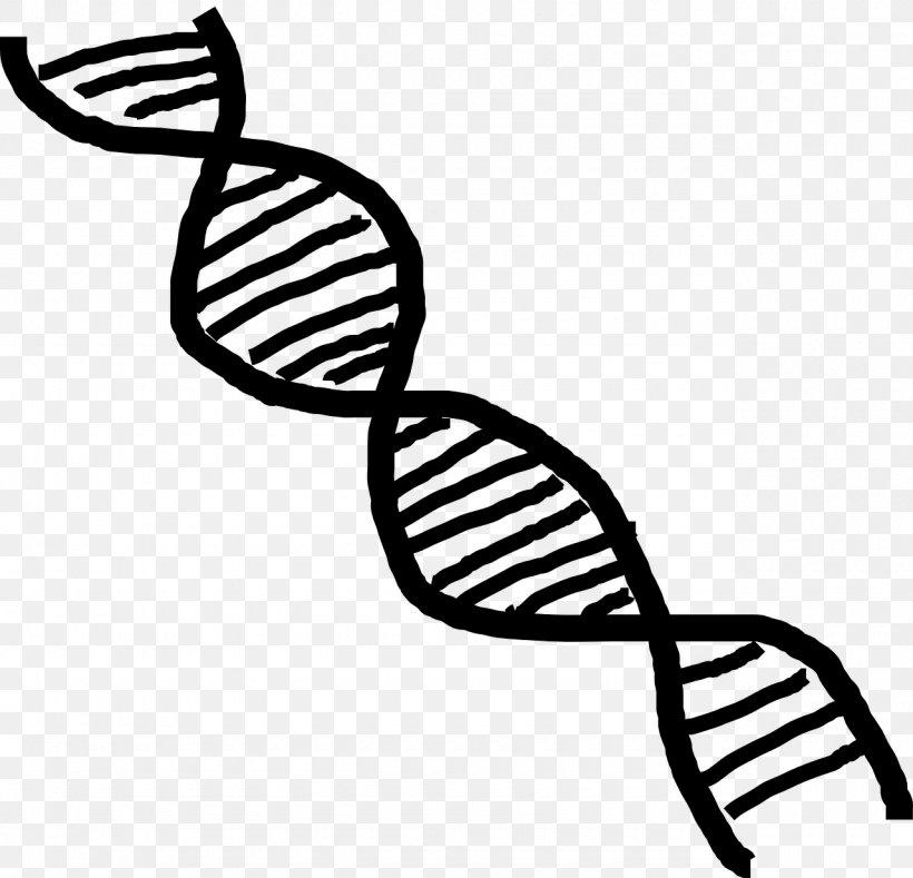 DNA Nucleic Acid Double Helix Vector Clip Art, PNG.