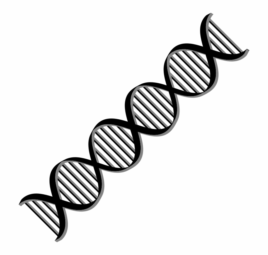 Dna Png Free Download Dna Clipart Png.