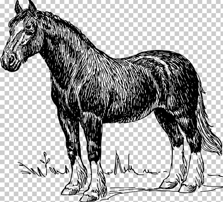 Clydesdale Horse Percheron Appaloosa Friesian Horse American.