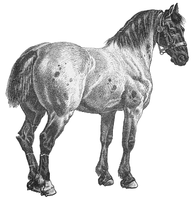 Free #Horses Clipart. Free Clipart Images, Graphics.