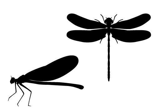 Dragonfly Silhouette Vector in Marshes Free Download.