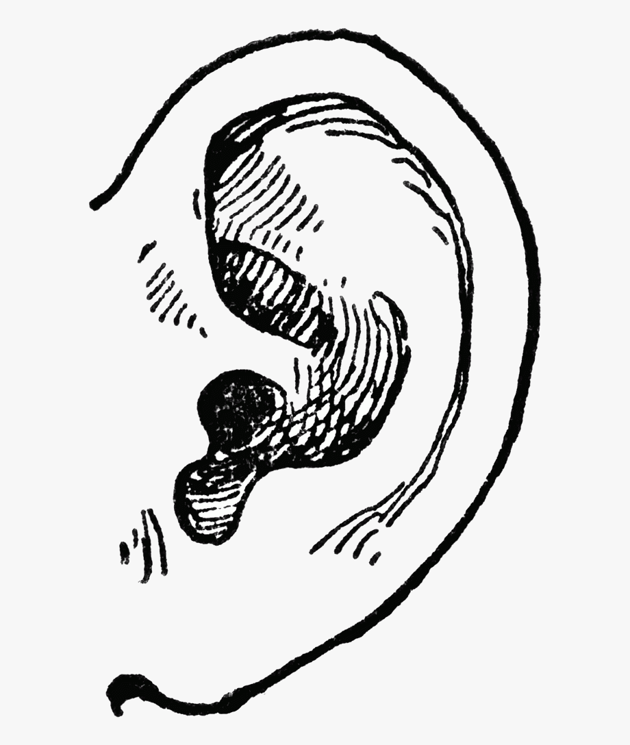 Ear A Pair Of Human Ears Clipart Collection Transparent.