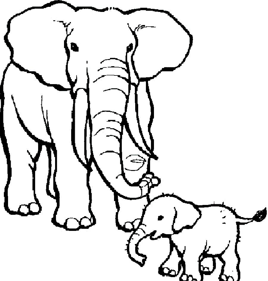 Elephant Black And White.