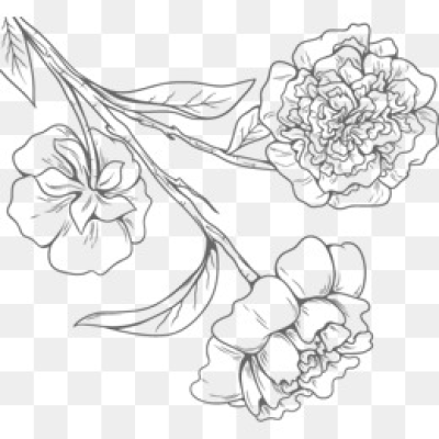 Download Free png Black And White Flowers PNG Images.