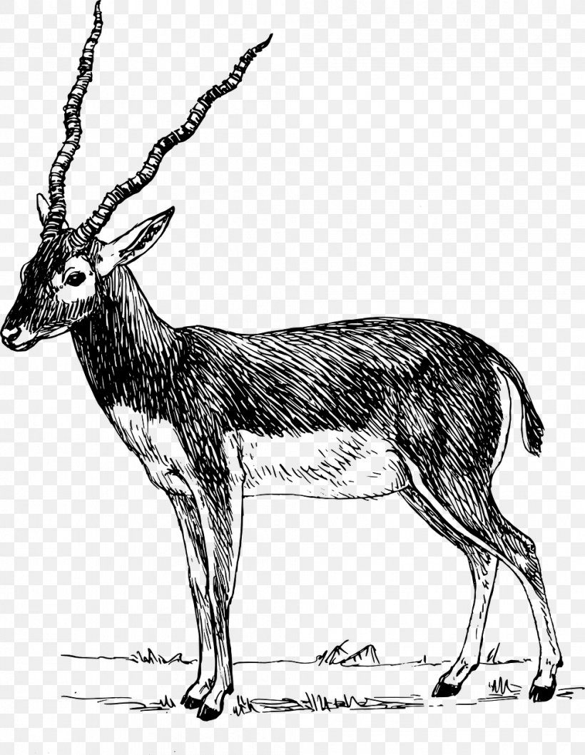 Antelope Gazelle Impala Clip Art, PNG, 992x1280px, Antelope.