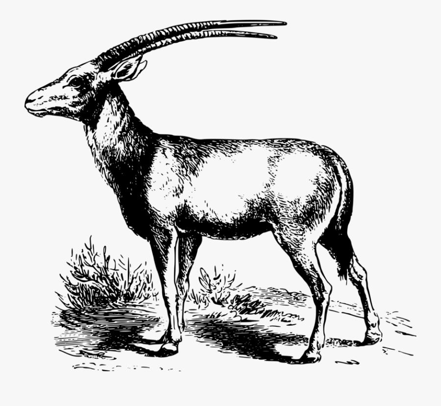 Antelope,musk Deer,gazelle.