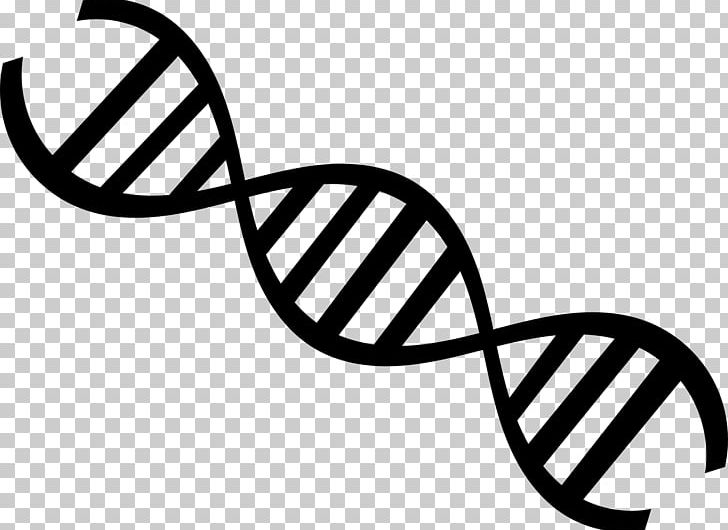 DNA Nucleic Acid Double Helix Genetics Molecular Biology PNG.