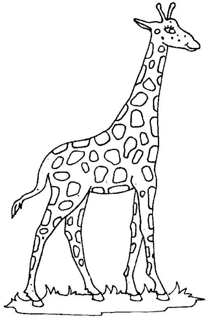 Image result for giraffe clipart black and white.