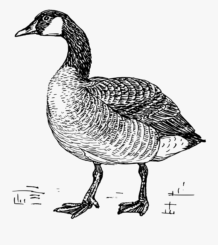 Goose Png Geese Black And White.