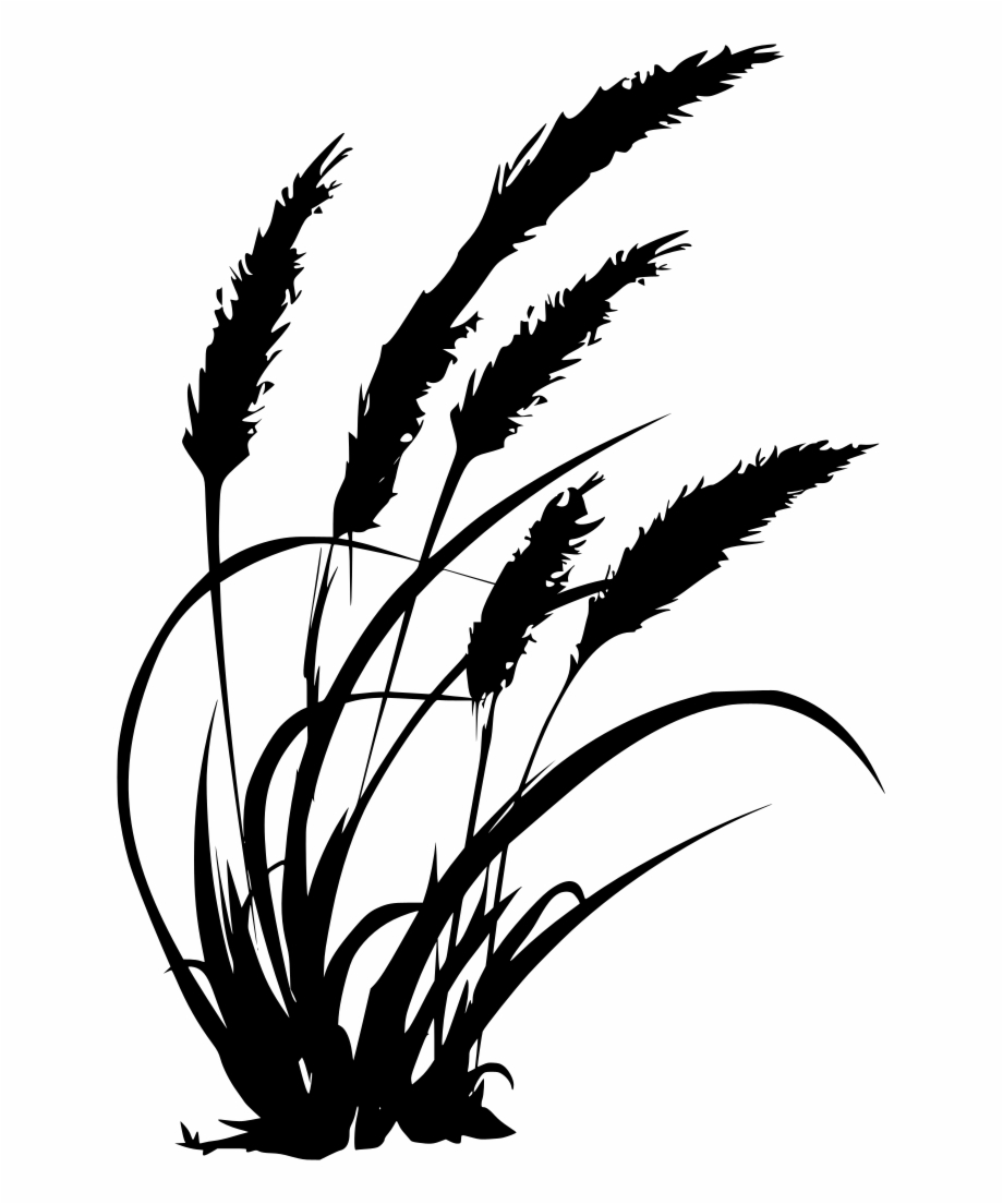 Download Png Black And White Wheat Grass Clipart.