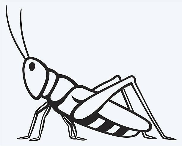 Grasshopper clipart black and white 4 » Clipart Station.