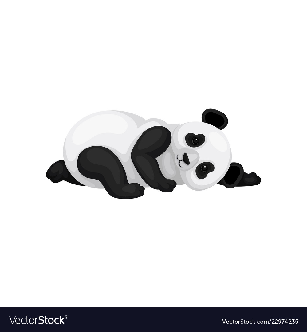 Lovely panda lying on the ground black and white.