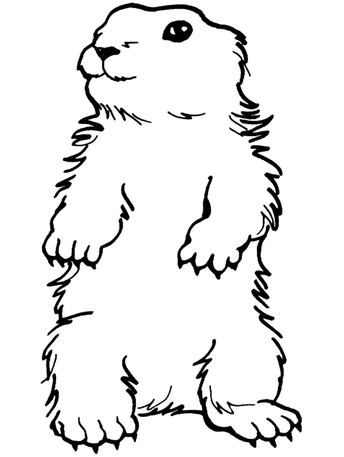 Download High Quality groundhog clipart white Transparent.