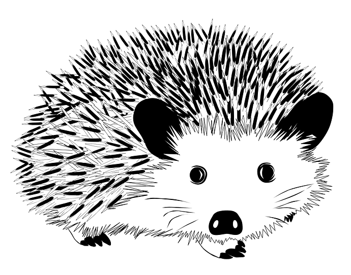 Black and white hedgehog clipart. Free download..