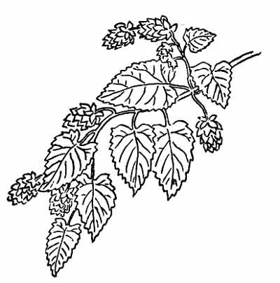 Free Herbs Clipart Black And White, Download Free Clip Art.