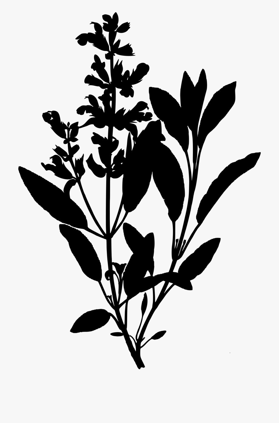 Herb Clipart Black And White.