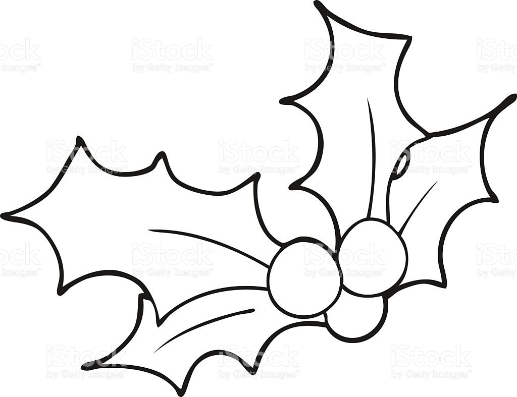Holly Leaves And Berries Drawing.