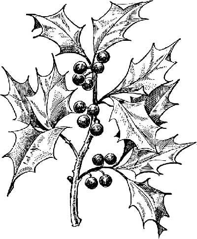 Holly clipart black and white 4 » Clipart Portal.