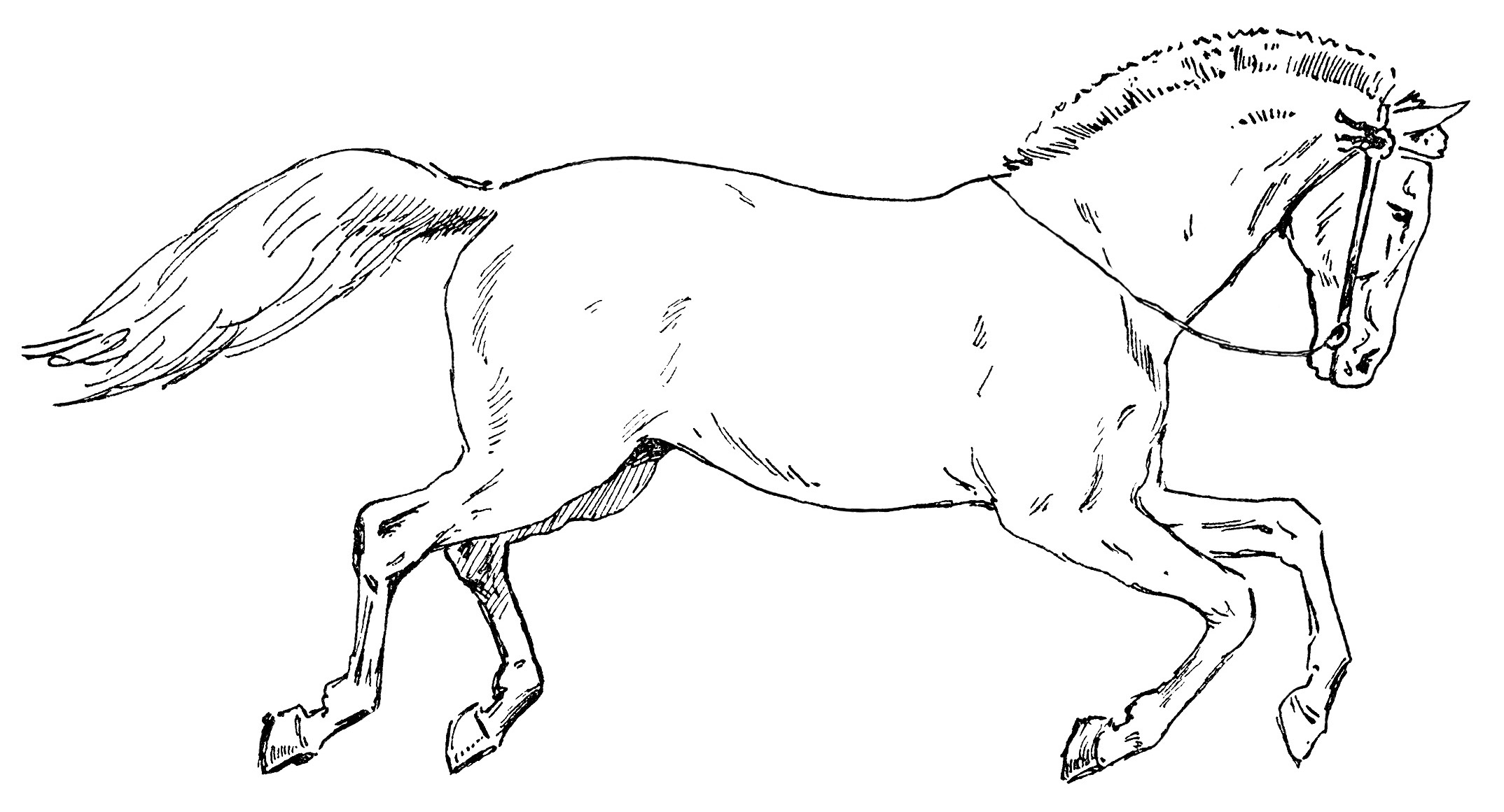 65+ Horse Clipart Black And White.