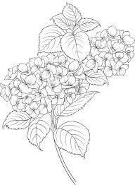 Image result for black and white clip art hydrangea.