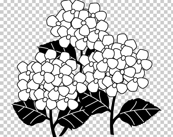 Black And White French Hydrangea Monochrome Painting PNG.