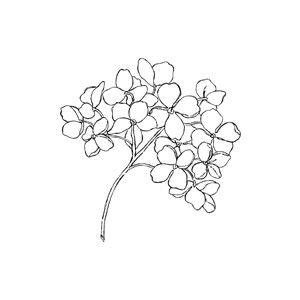 Black and white hydrangea clipart.