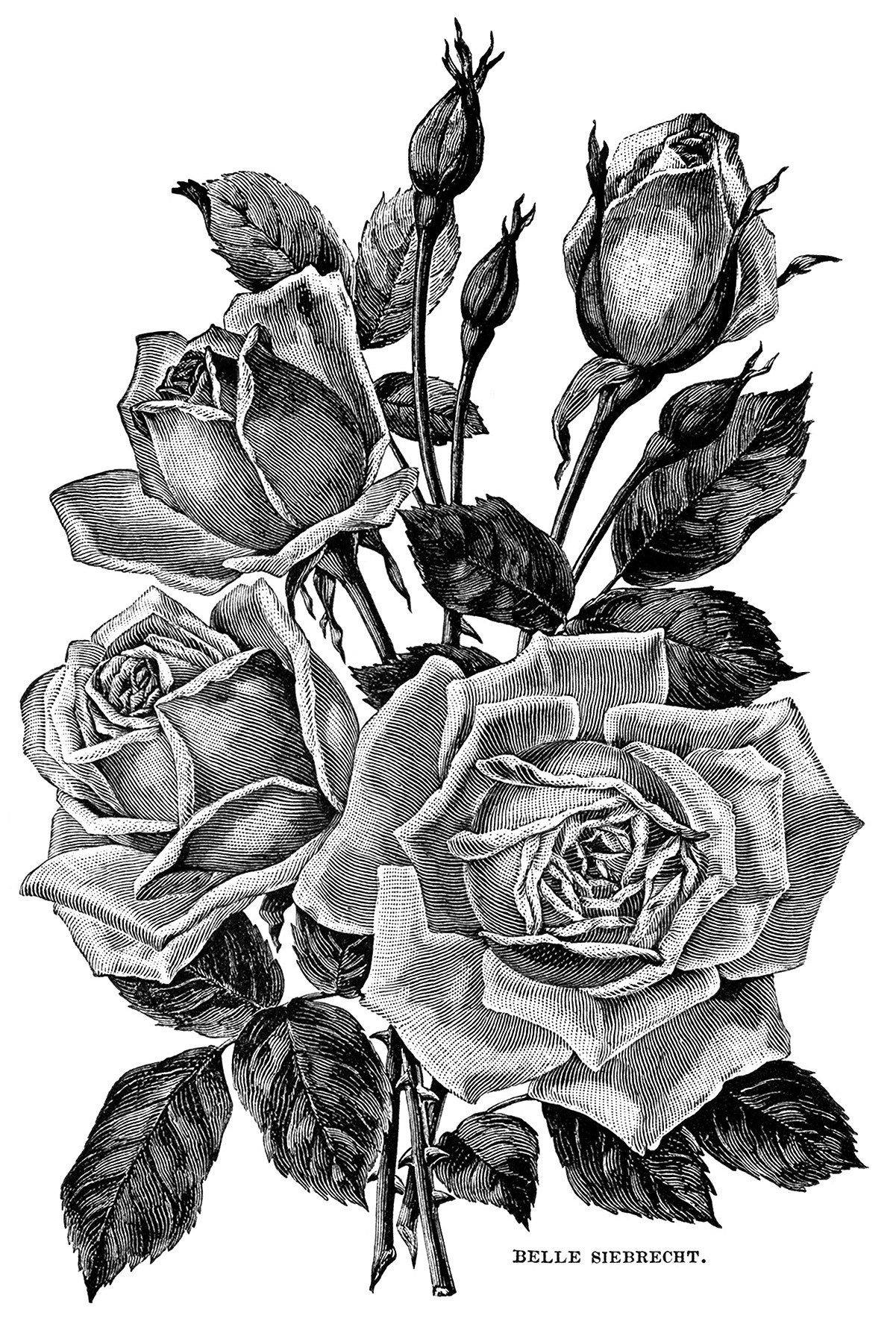vintage garden clipart, black and white flower illustration.