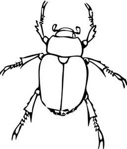 Black and white clip art of a insects.