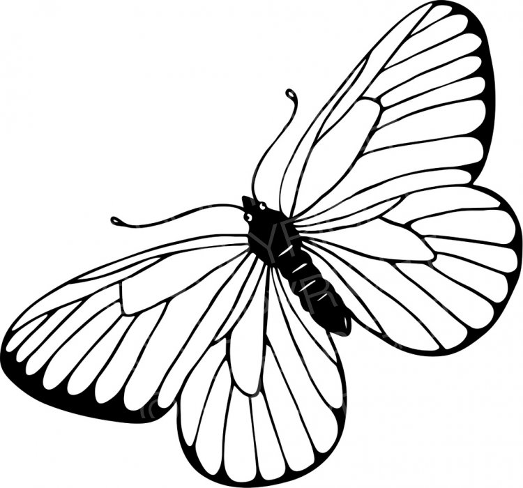 Black & White Line Drawing of a Butterfly Prawny Insect Clip Art.