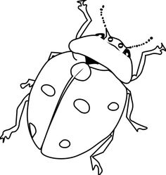 Free Bug Cliparts Black, Download Free Clip Art, Free Clip Art on.