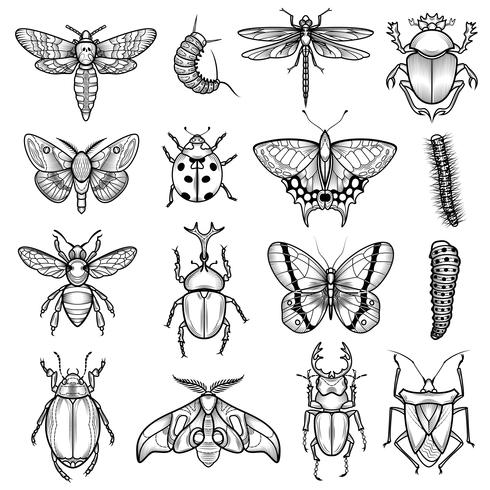 Insects Black White Line Icons Set.