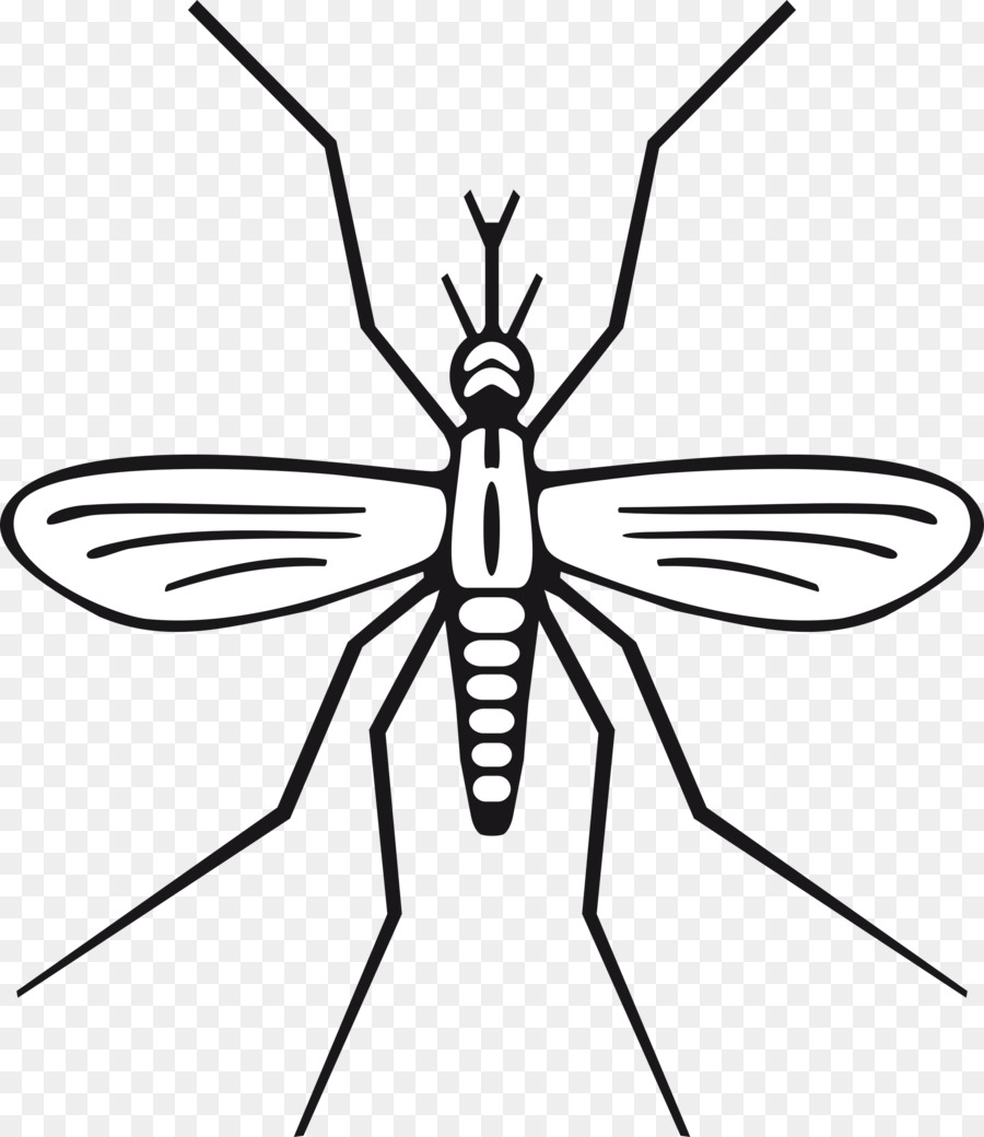 Black And White Clipart Insects.