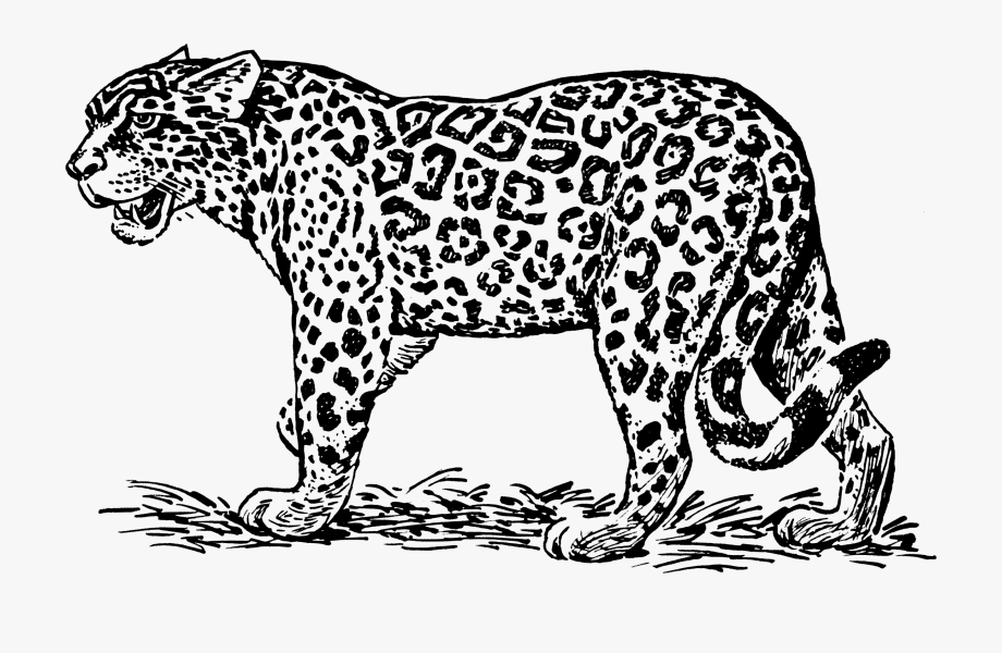 Jaguar Black And White , Transparent Cartoon, Free Cliparts.