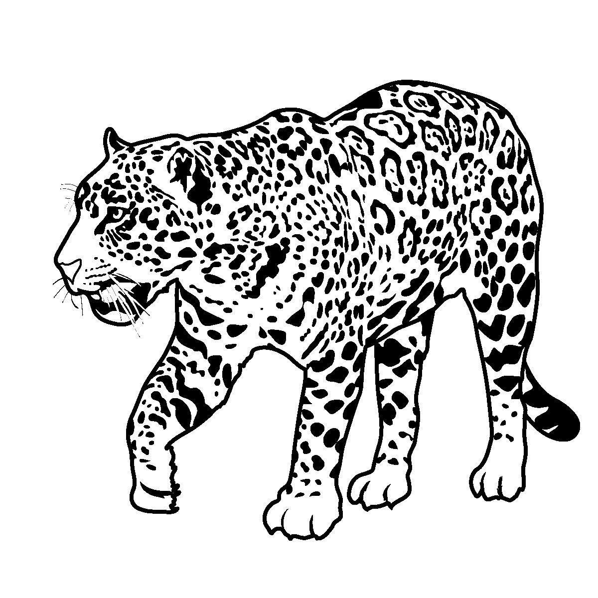 Jaguar Clipart Black And White.