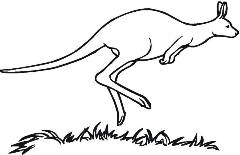 Kangaroo Clipart Outline.