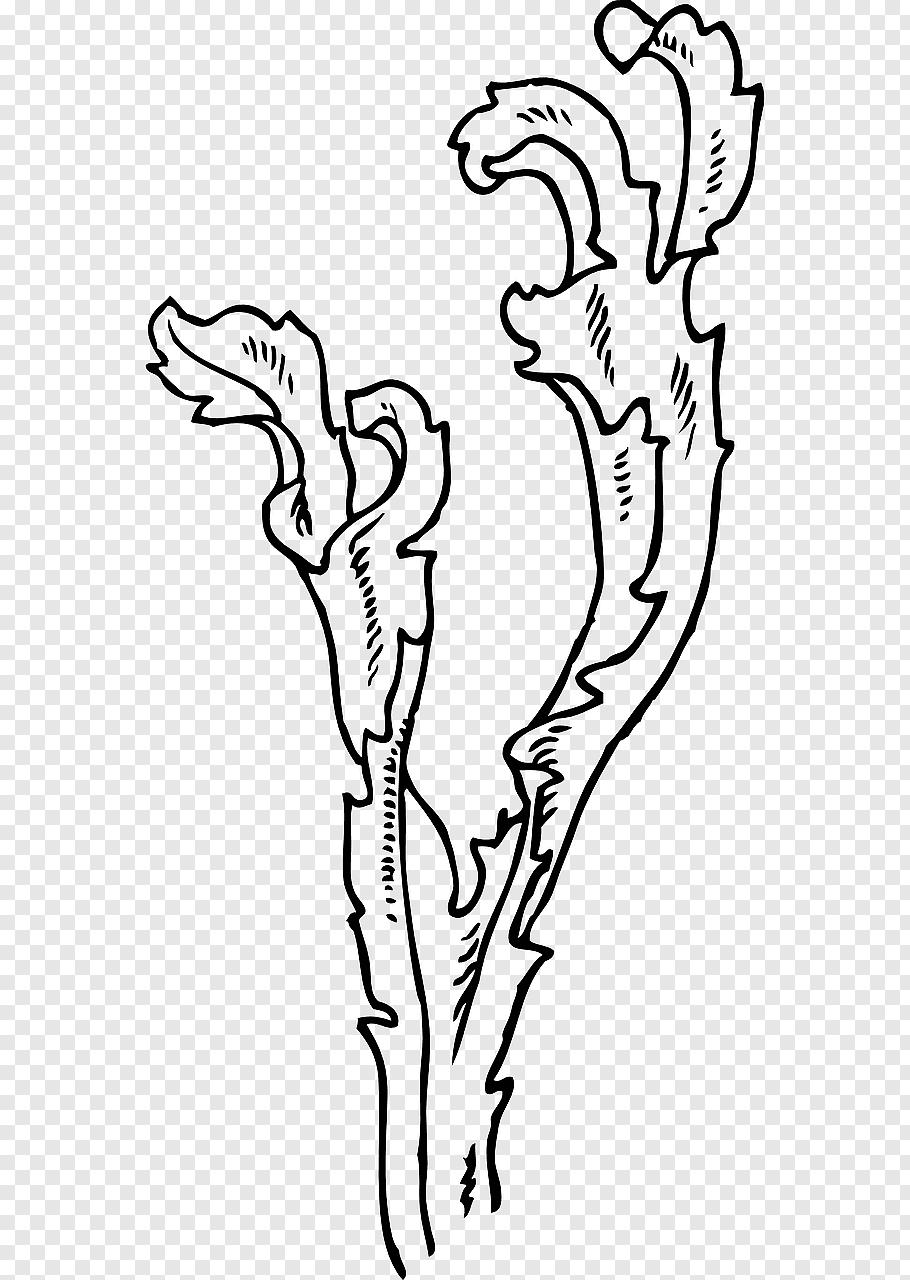 Seaweed, Kelp, Algae, Giant Kelp, Drawing, Head, Line Art.