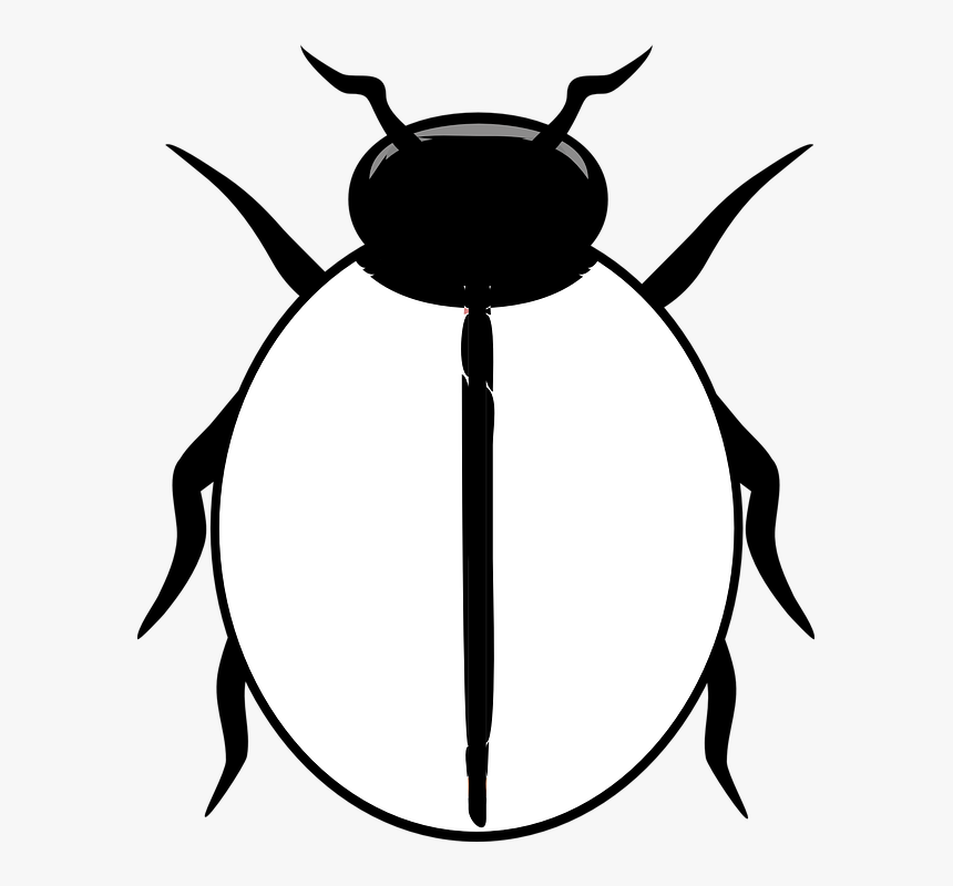 Transparent Ladybug Png.