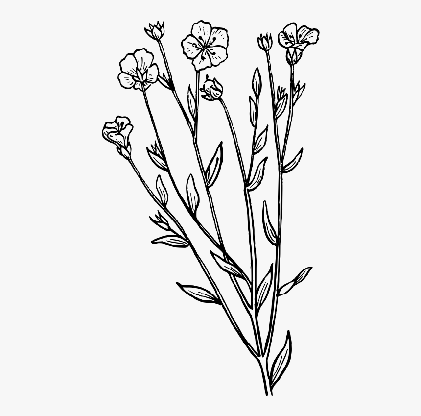 Lavender Clipart Black And White, HD Png Download.