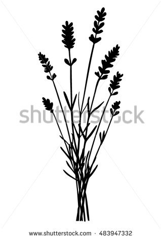668 Lavender free clipart.