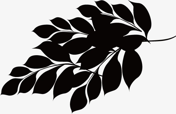 Leaves, Black And White, Leaf PNG And Ve #377765.