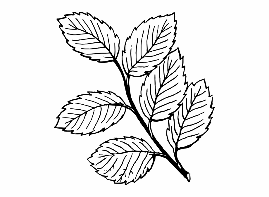 Leaves Clipart Black And White Free PNG Images & Clipart Download.